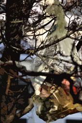 Müllbeutel in Baum