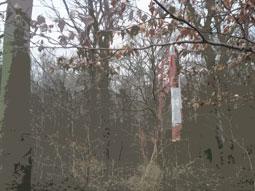 Absperrband in Baum