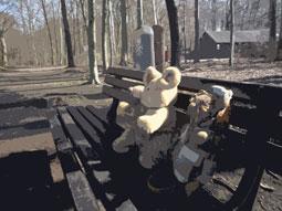 Bank mit zwei Stoffbären